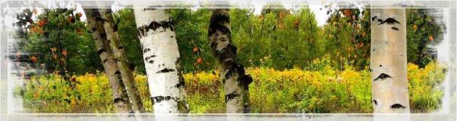 природата в духовния свят надминава земната красота; красотата на отвъдния живот
